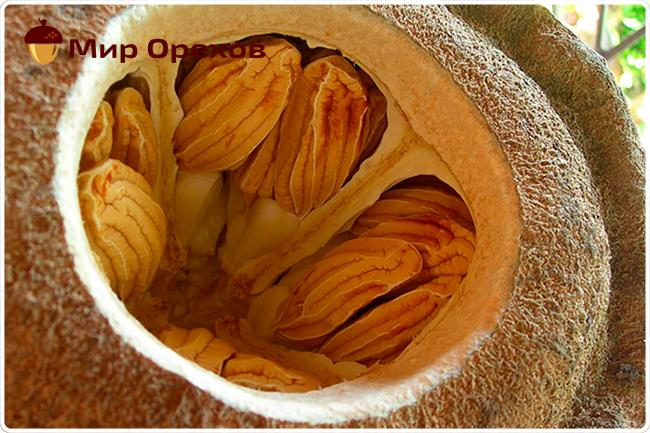 Бразильский орех: полезные свойства и противопоказания, КБЖУ