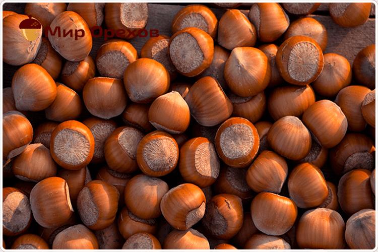 коричневый фундук
