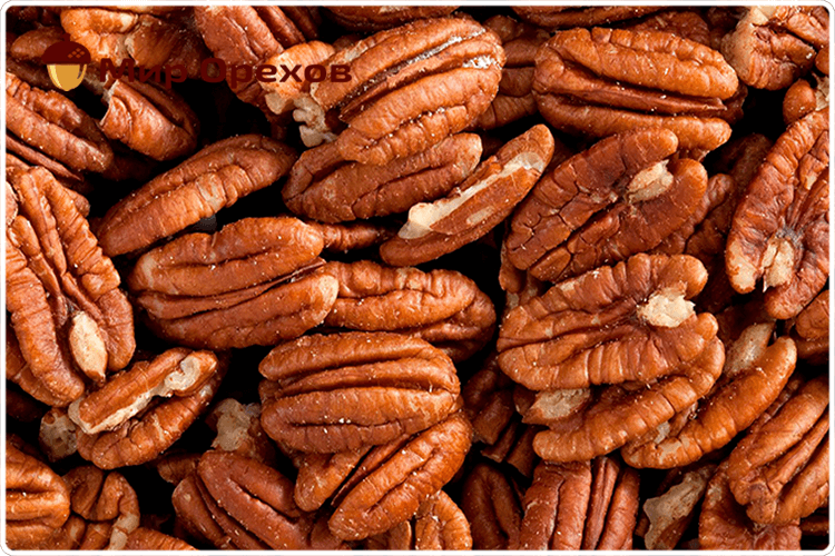 плоды пекана