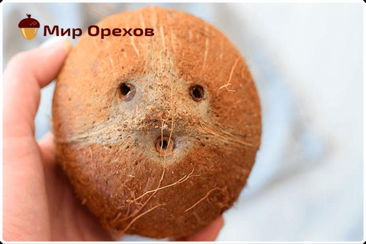 обезьянка коко